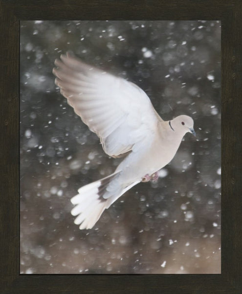 Winter Dove in a 16 x 20 Print framed with Espresso Walnut Frame - Schmidt Fine Art Gallery