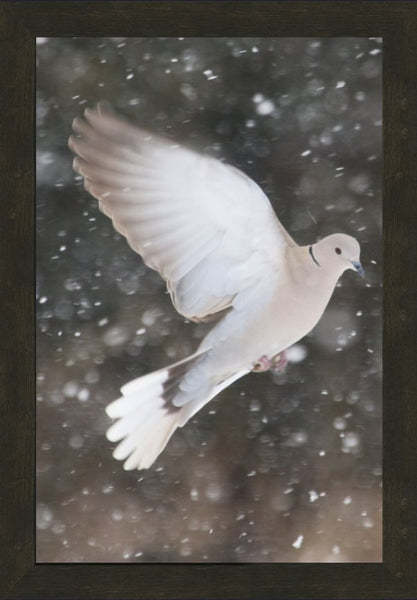 Winter Dove in a 16 x 24 Print framed with Espresso Walnut Frame - Schmidt Fine Art Gallery