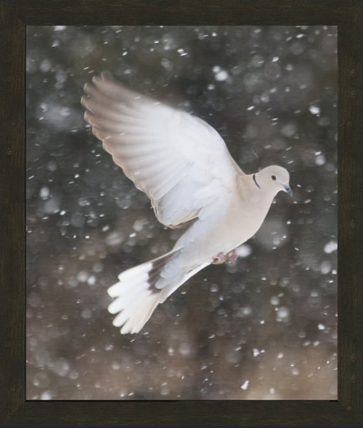 Winter Dove in a 20 x 24 Print framed with Espresso Walnut Frame - Schmidt Fine Art Gallery