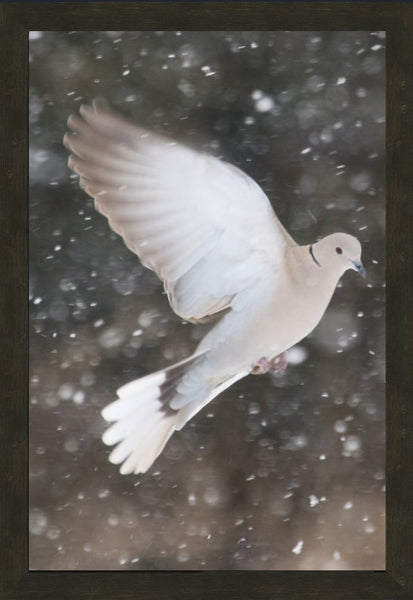 Winter Dove in a 20 x 30 Print framed with Espresso Walnut Frame - Schmidt Fine Art Gallery