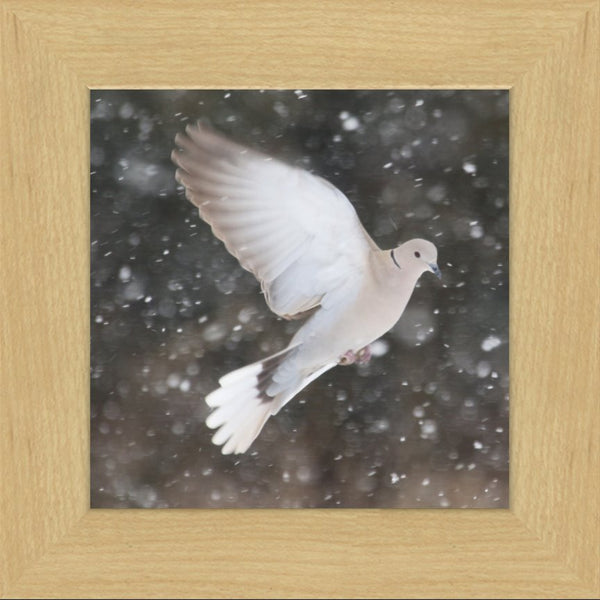 Winter Dove in a 8 x 8 Print framed with Blonde Maple Frame - Schmidt Fine Art Gallery