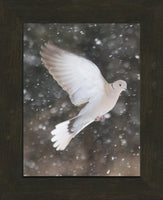 Winter Dove in a 8.5 x 11 Print framed with Espresso Walnut Frame - Schmidt Fine Art Gallery