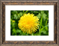 Yellow Dandelion in a 10 x 15 Print with mat framed in a Bronze Ornate Frame - Schmidt Fine Art Gallery