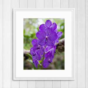 Purple Orchids - Instant Printable Download