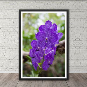 Purple Orchids - Prints and Wall Art