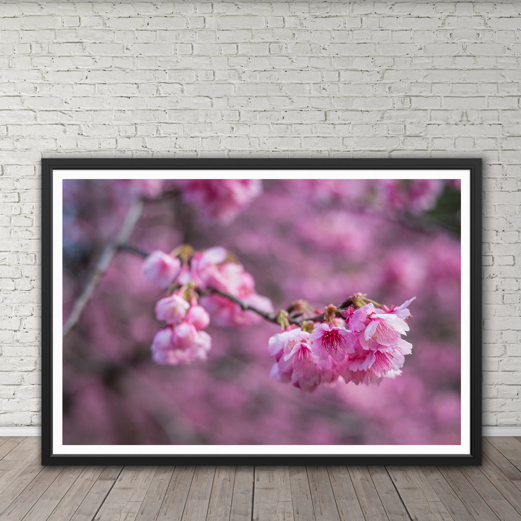 Cherry Blossoms - Instant Printable Download