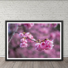 Load image into Gallery viewer, Cherry Blossoms - Prints and Wall Art