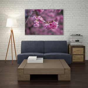 Cherry Blossoms - Prints and Wall Art