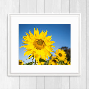 Bees on Sunflower - Instant Printable Download