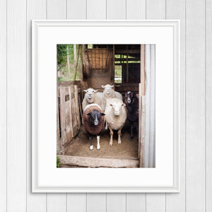 Sheep in a Shed - Instant Printable Download
