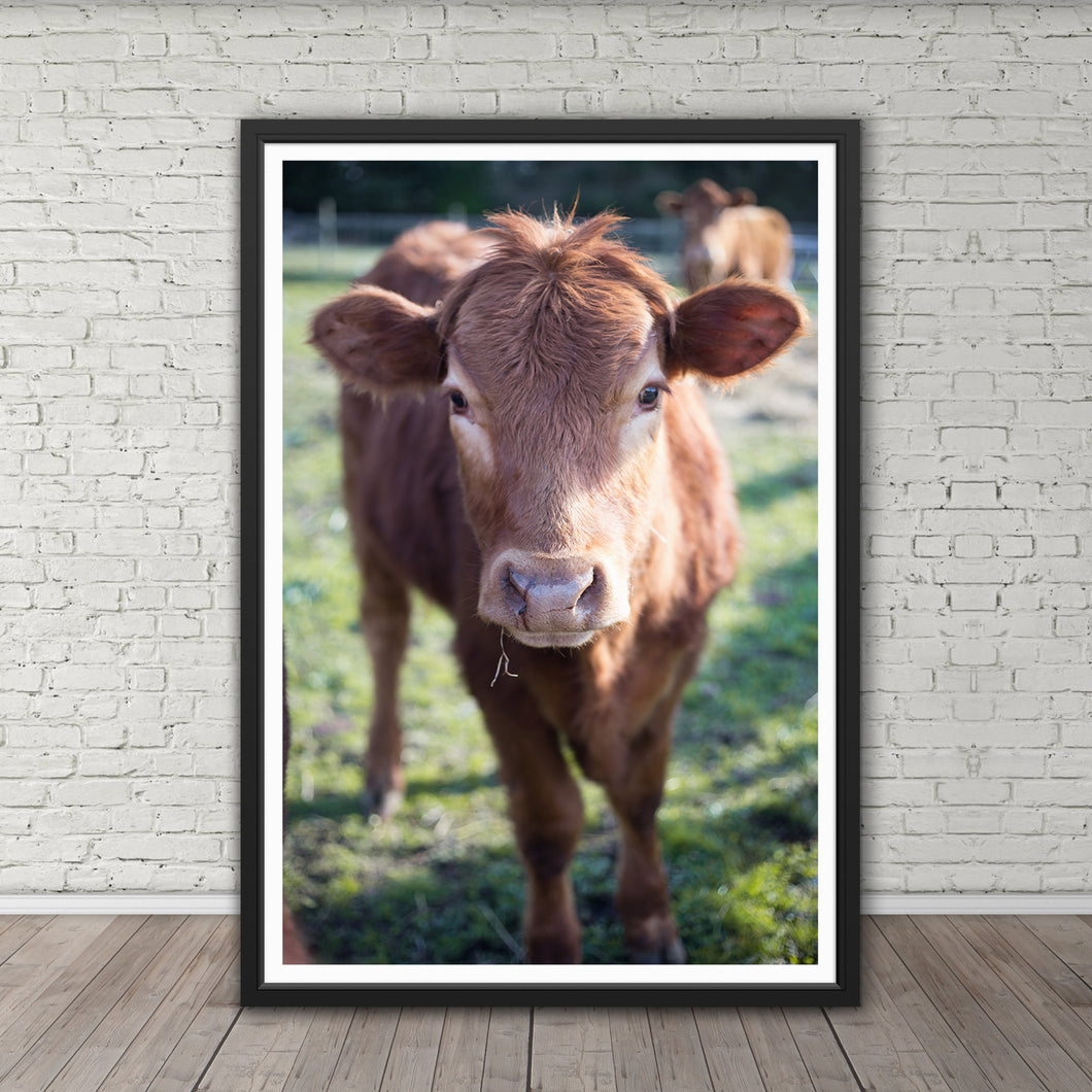 Calf - Instant Printable Download