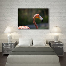 Load image into Gallery viewer, Flamingo - Prints and Wall Art