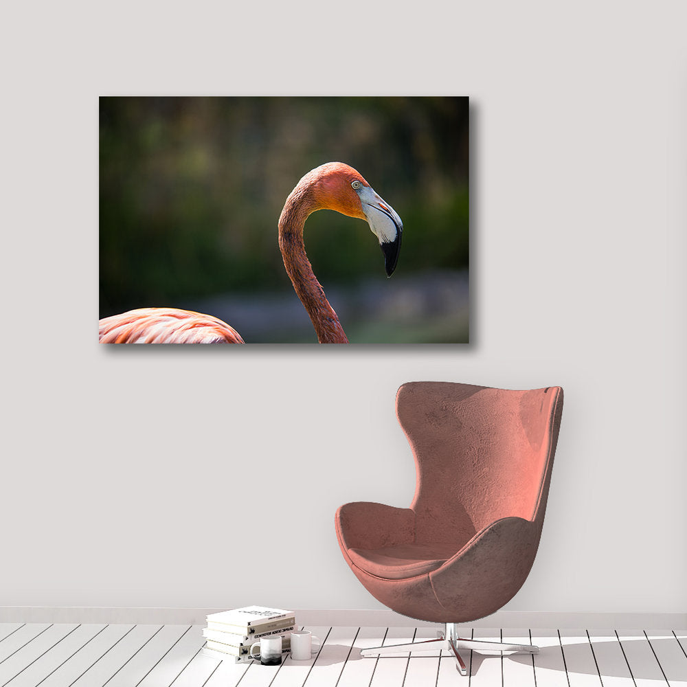Flamingo - Prints and Wall Art