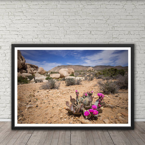 Blooming Prickly Pear Cactus - Prints and Wall Art