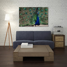 Load image into Gallery viewer, Peacock - Prints and Wall Art