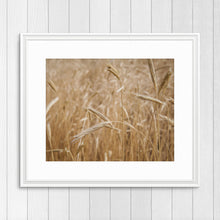 Load image into Gallery viewer, Wheat Field - Prints and Wall Art