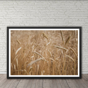 Wheat Field - Prints and Wall Art