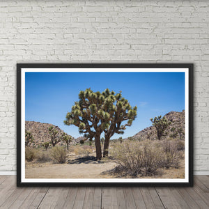 Joshua Tree - Prints and Wall Art