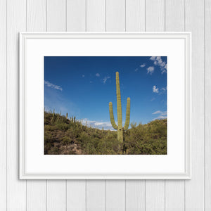Saguaro - Prints and Wall Art