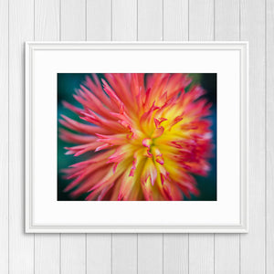 Dahlia - Prints and Wall Art