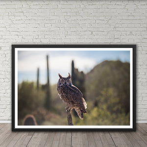Great Horned Owl - Prints and Wall Art