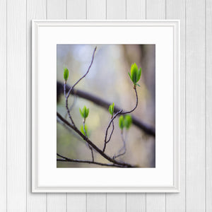 Budding Leaves - Instant Printable Download