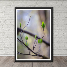 Load image into Gallery viewer, Budding Leaves - Prints and Wall Art