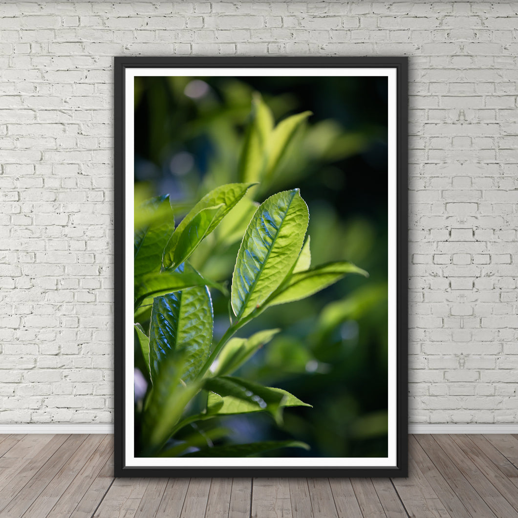 Green Leaves - Instant Printable Download