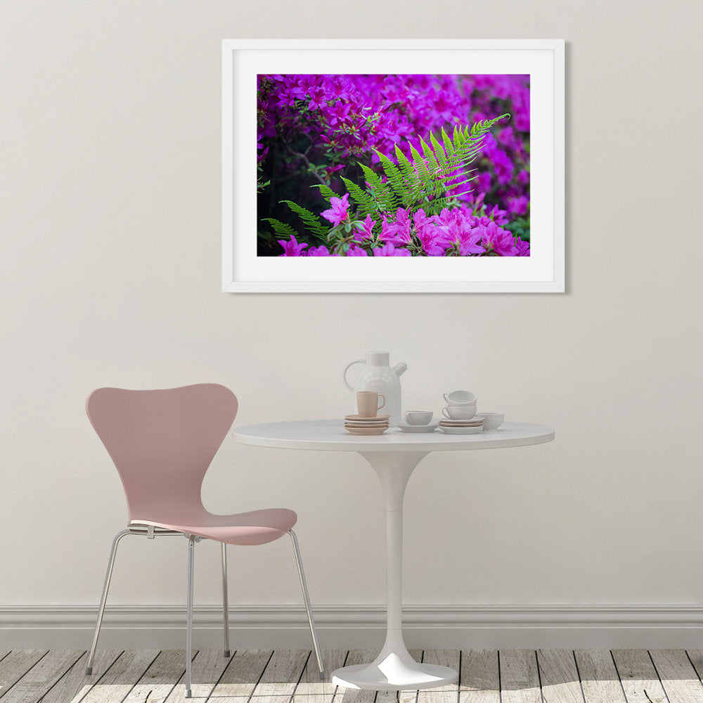 Fern in Azaleas - Prints and Wall Art
