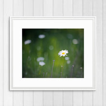 Load image into Gallery viewer, Daisy - Prints and Wall Art