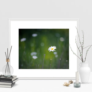 Daisy - Prints and Wall Art
