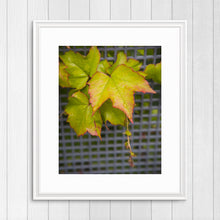 Load image into Gallery viewer, Raindrops on Leaves - Instant Printable Download