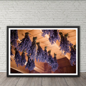 Drying Lavender - Prints and Wall Art
