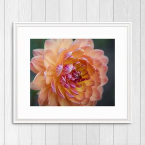 Peach Dahlia - Instant Printable Download