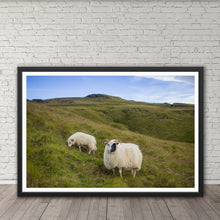 Load image into Gallery viewer, Icelandic Sheep - Prints and Wall Art