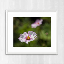 Load image into Gallery viewer, Delicate Pink Flower - Prints and Wall Art