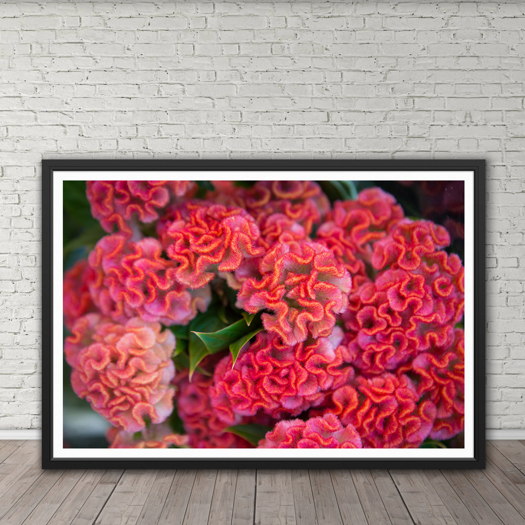 Celosia (Brain Flower) - Instant Printable Download