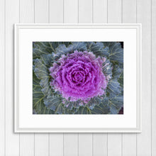 Load image into Gallery viewer, Ornamental Cabbage - Prints and Wall Art