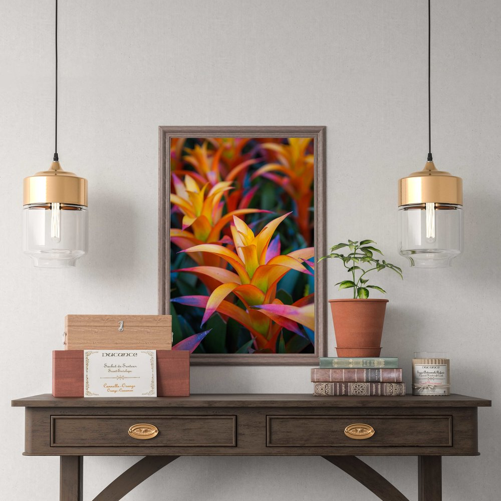 Bromeliad - Prints and Wall Art