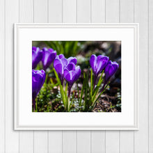 Load image into Gallery viewer, Crocuses - Instant Printable Download
