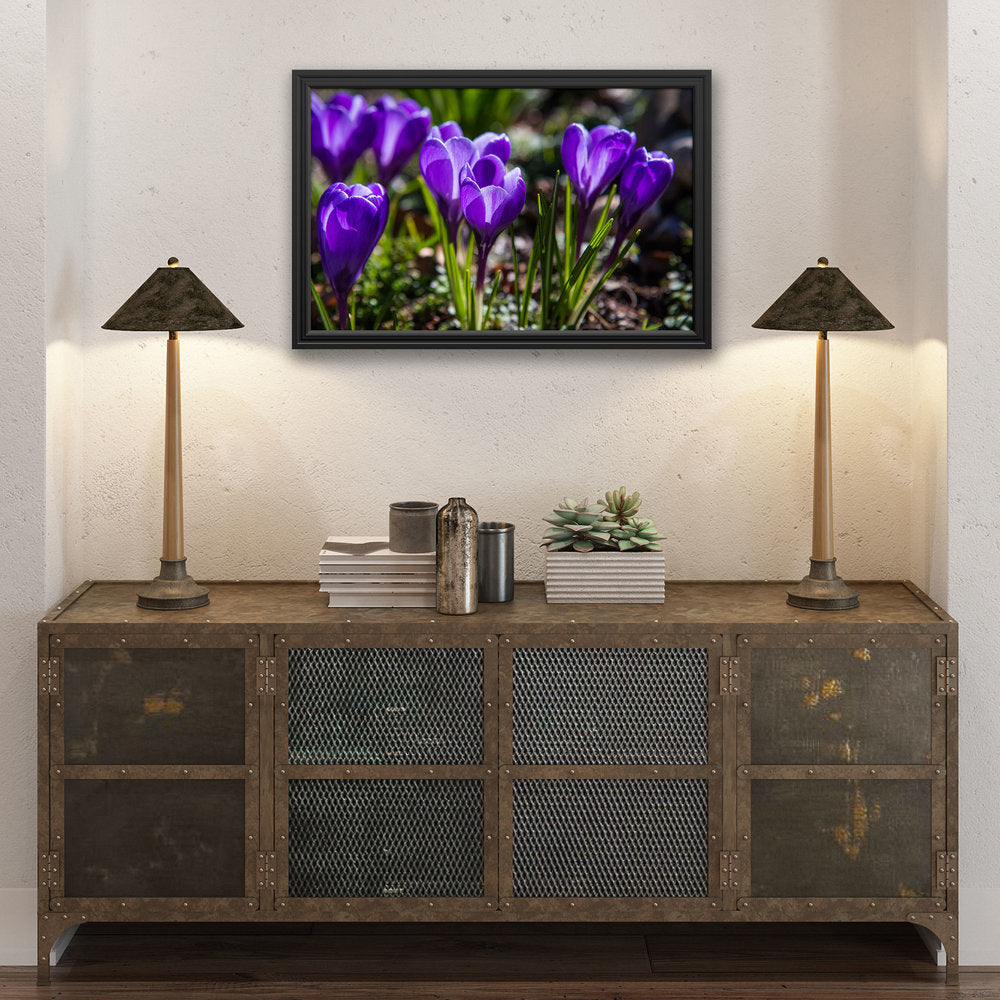 Crocuses - Prints and Wall Art