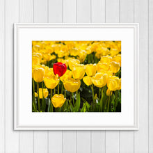 Load image into Gallery viewer, Red Tulip in Yellow Tulips - Instant Printable Download