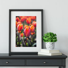 Load image into Gallery viewer, Princess Irene Tulips - Prints and Wall Art