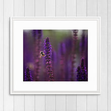 Load image into Gallery viewer, Bee on Purple Sage - Instant Printable Download