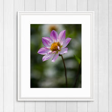 Load image into Gallery viewer, Pink Collarette Dahlia - Prints and Wall Art