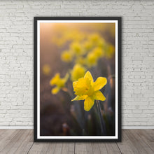 Load image into Gallery viewer, Daffodil at Dawn - Instant Printable Download