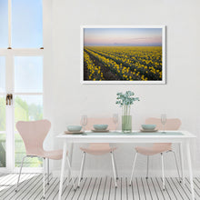 Load image into Gallery viewer, Daffodil Field at Sunrise - Prints and Wall Art