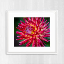 Load image into Gallery viewer, Red Cactus Dahlia - Instant Printable Download