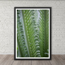 Load image into Gallery viewer, Sago Palm Frond Curls - Prints and Wall Art