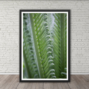 Sago Palm Frond Curls - Prints and Wall Art